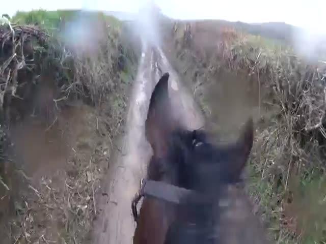 Мужчина скачет на бывшей скаковой лошади