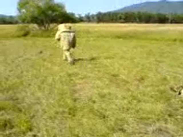 Тренировка служебной собаки пошла не по плану