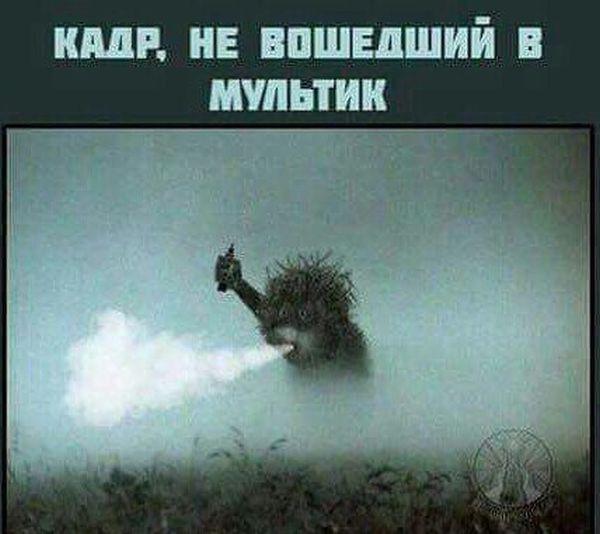ежик в тумане фото приколы установить
