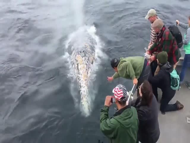 В Калифорнии киты поиграли с туристами