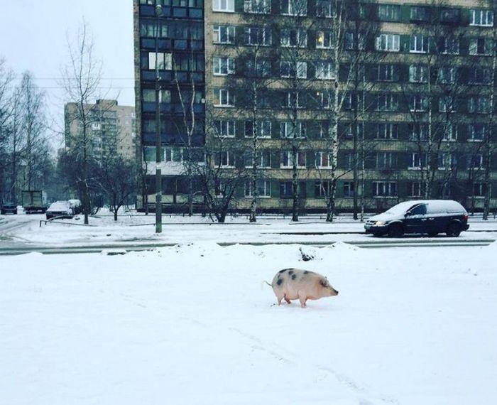 Фото, которые возможно было сделать только в России. Часть 63 (40 фото)