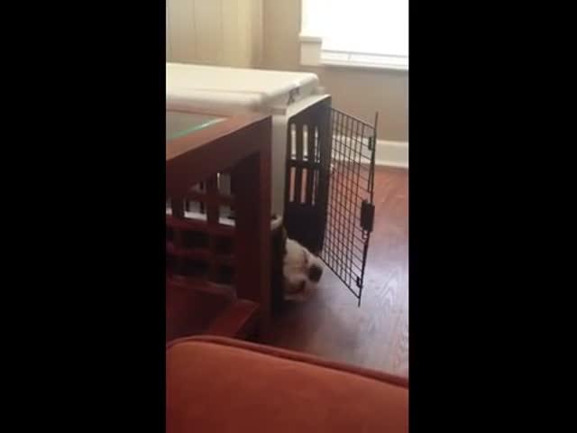 Ленивая собака бьет себя по носу