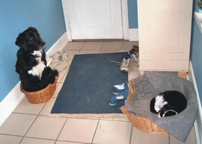 Животные, которые всегда сохраняют безразличие (40 фото)