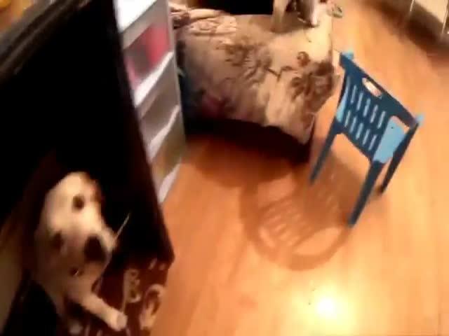 Кот и пес натворили дел