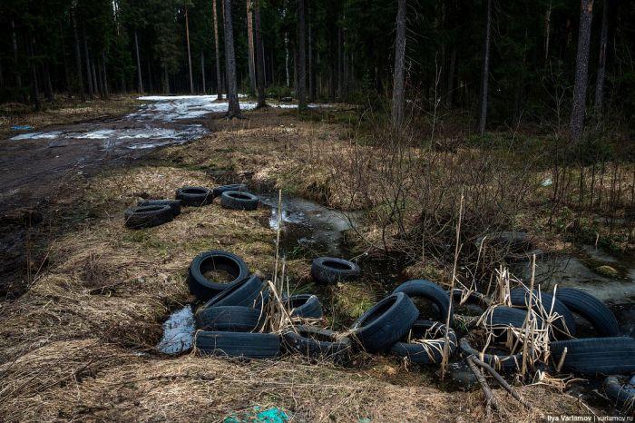 Печальная картина придорожных лесов России (8 фото)