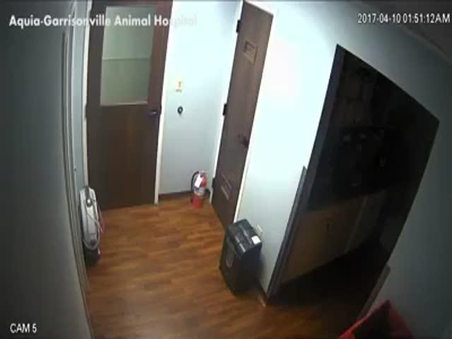 Побег собаки из госпиталя для животных