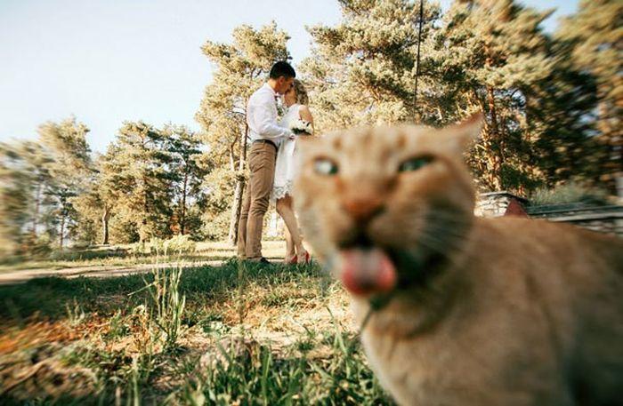 Забавные кошки, испортившие кадр (27 фото)