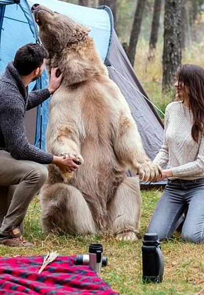 Фотосессия с медведем в лесу (6 фото)