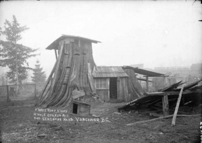 Дома-пни американских переселенцев XIX века (14 фото)