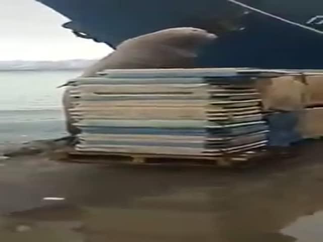 Сивуч угостился уловом моряков