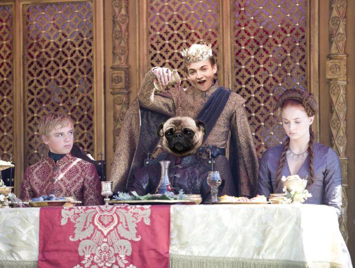 Актер Джек Глисон, король Джоффри из «Игры престолов», и его мопс стали героями фотожаб (9 фото)