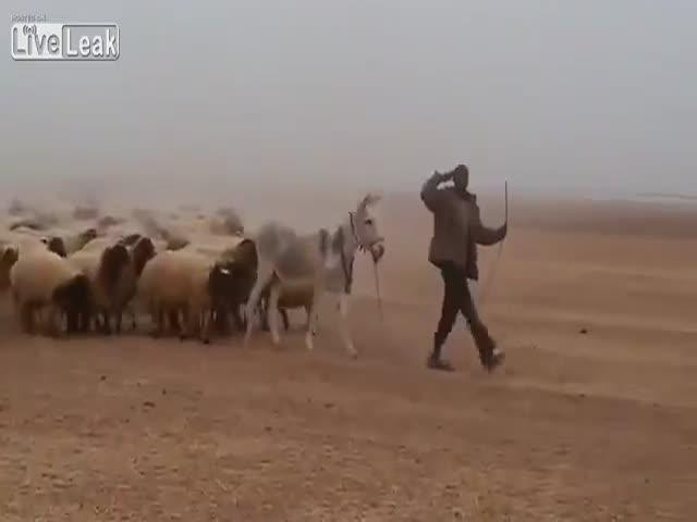 Марш самой мощной «армии» мира
