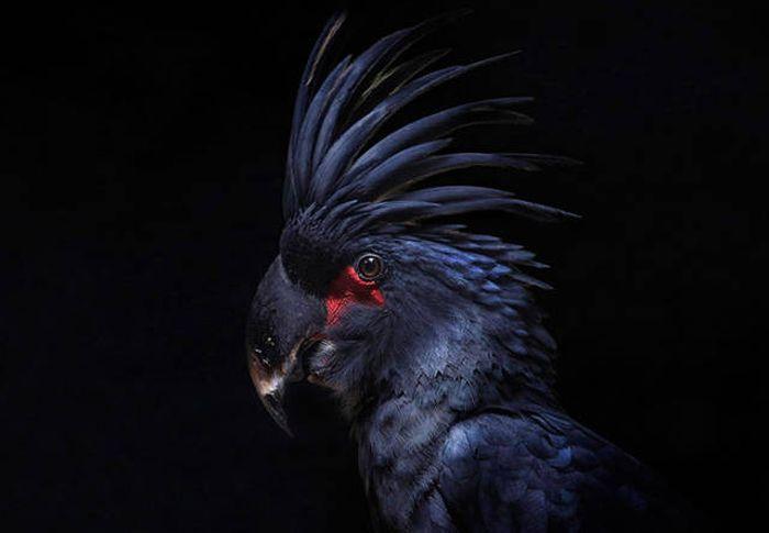 Животные, которые выглядят невероятно круто (27 фото)