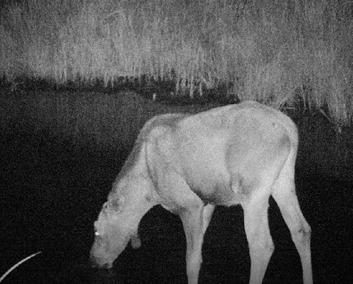 Животные в зоне отчуждения ЧАЭС (16 фото)