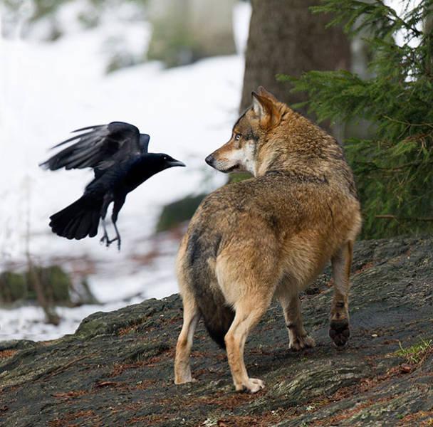 Une rencontre dans les bois