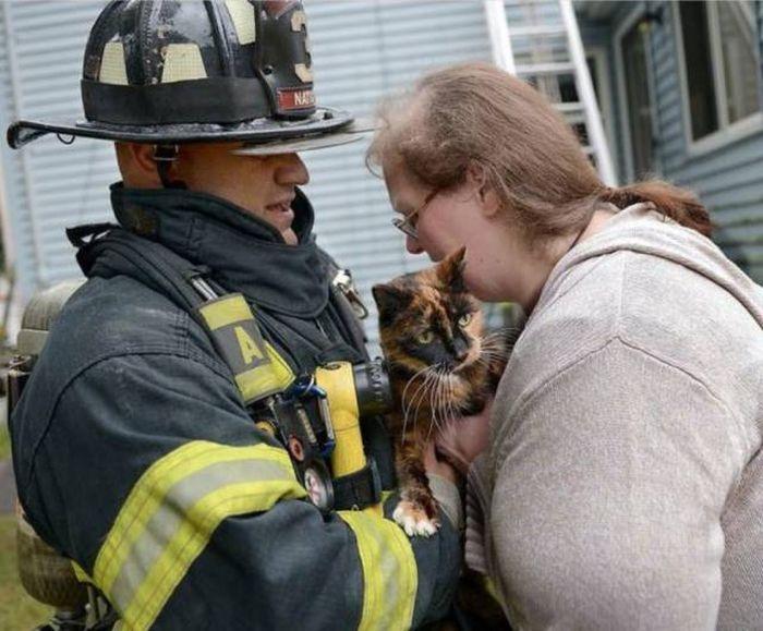 Картинка с двумя котами вынесенными из пожара