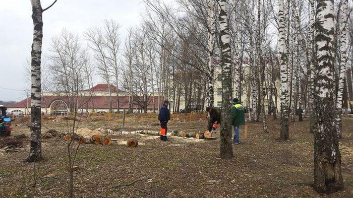 В Сергиевом Посаде срубили Рощу Победы, высаженную ветеранами  (9 фото)