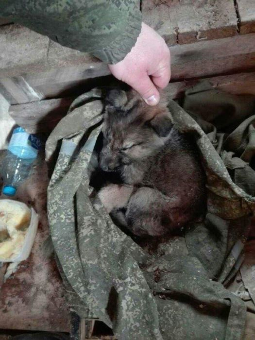 История спасения несчастного щенка (13 фото)