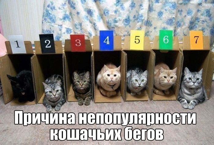 podborka_vecher_13.jpg