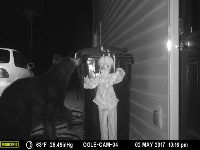 Хозяин дома отучил медведя переворачивать мусорный бак