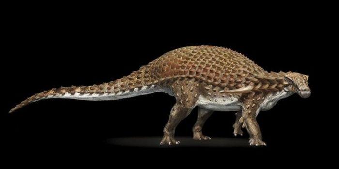 В канадском музее показали останки нодозавра, которым уже более 110 миллионов лет (6 фото)