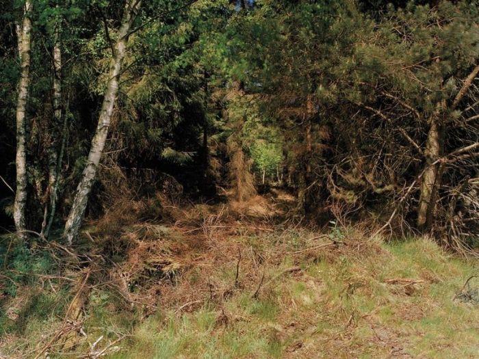 Найдите снайпера на этом фото. Часть 3 (фото)