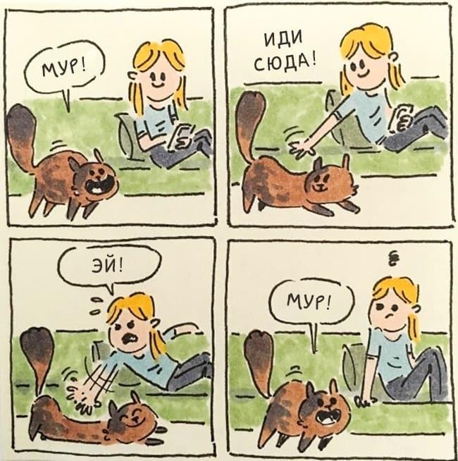 Смешные и правдивые комиксы о жизни с котом (15 картинок)