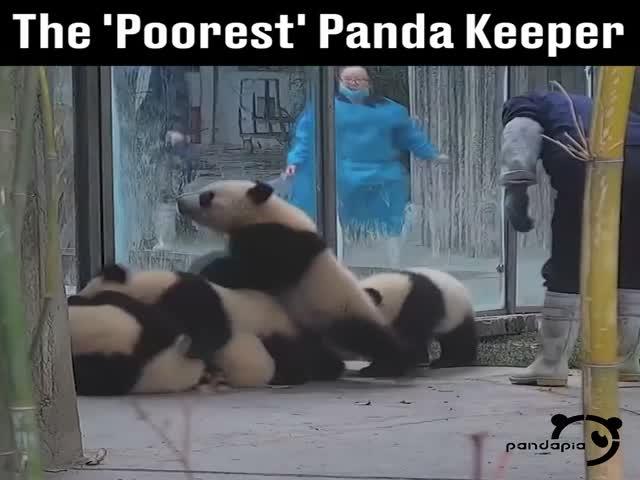 Трудовые будни сотрудника центра содержания панд