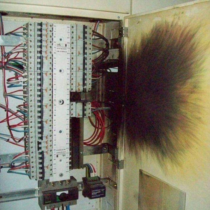 «Инстаграм» электромонтажника (18 фото)