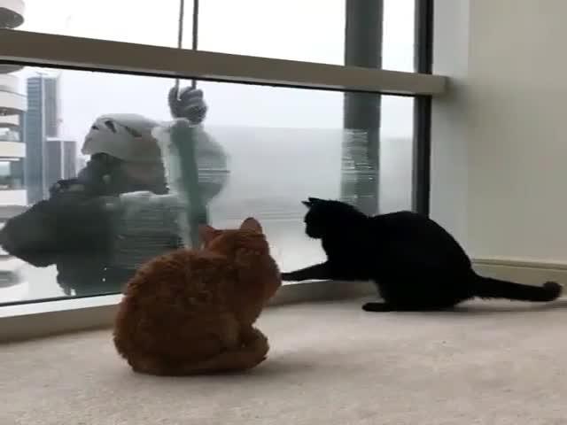 Мойщик окон не смог удержаться, чтобы не поиграть с котиком