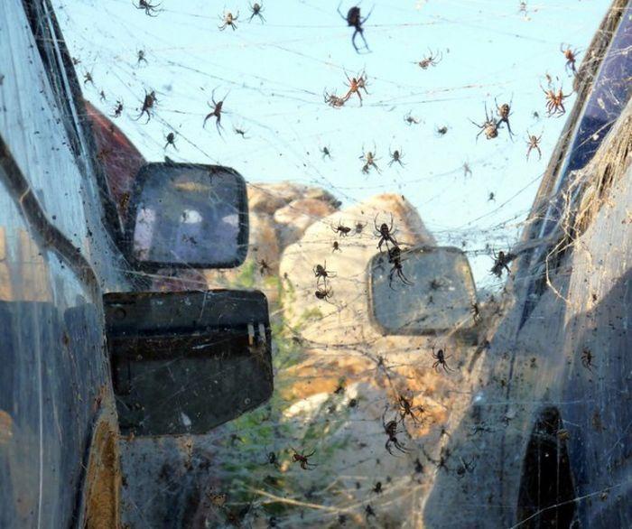 Ужасные австралийские животные (14 фото)