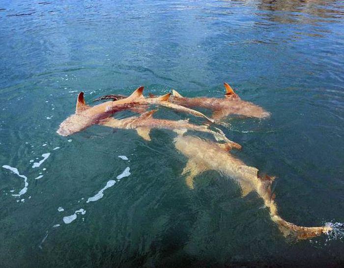 Типичная картина для любителей рыбалки в Австралии (6 фото)