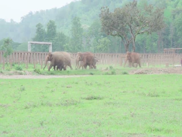 Слоны приветствуют спасенного слоненка