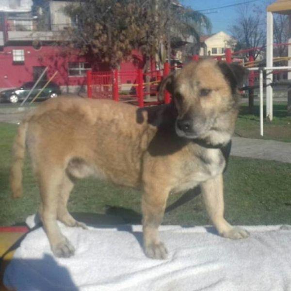 Спасение пса, облитого мазутом (8 фото)