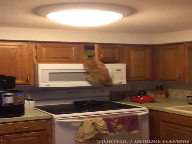 Голодный кот в поисках еды
