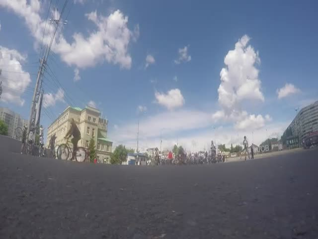 Четвероногий воришка украл экшн-камеру