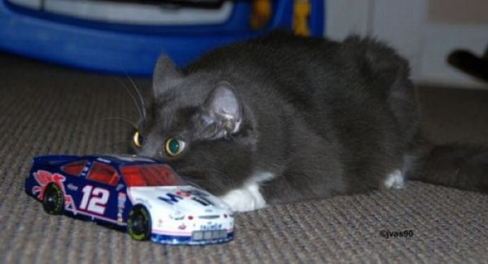 Коты, выглядывающие из своих укрытий (20 фото)