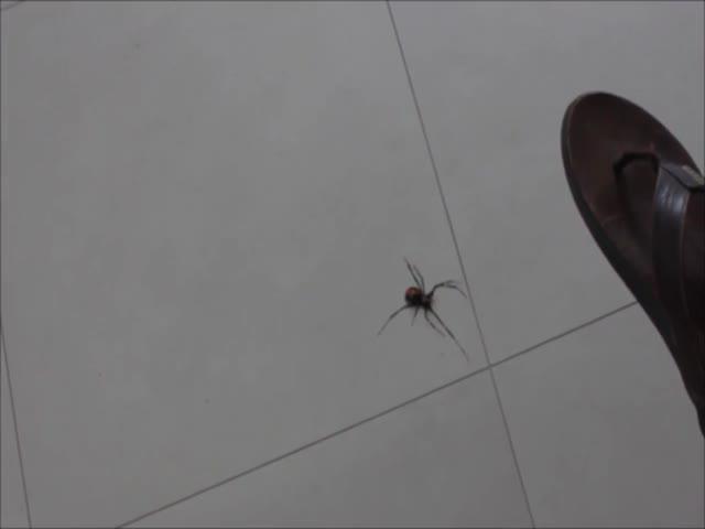Что бывает, если прихлопнуть большого паука
