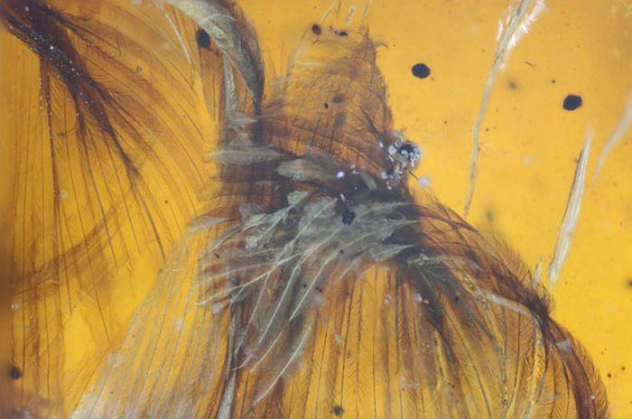 В янтаре обнаружили древнюю птицу, жившую 99 миллионов лет назад (6 фото)