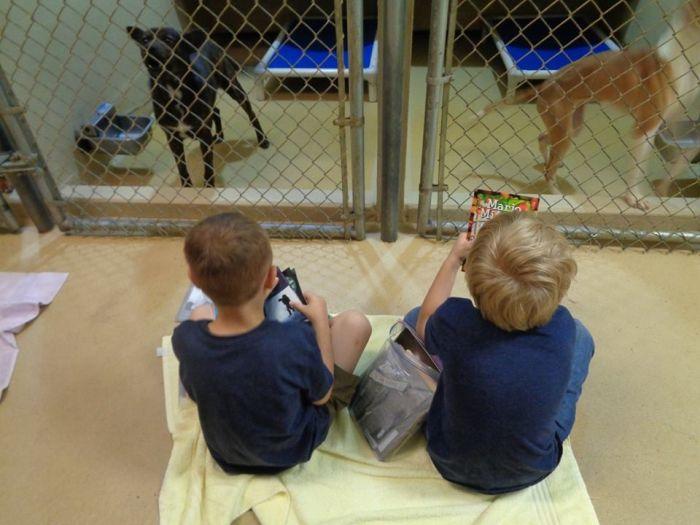 Американские школьники почитали книги животными из приюта (9 фото)
