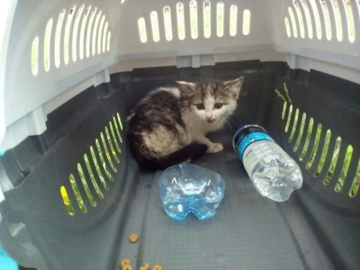 Для спасения котенка в Челябинске демонтировали фонарный столб (6 фото)