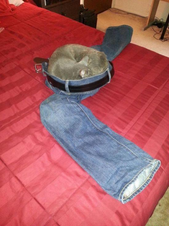 Странное поведение кошек (30 фото)