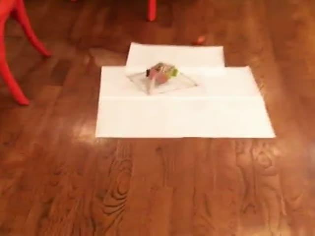 Собака испортила эксперимент