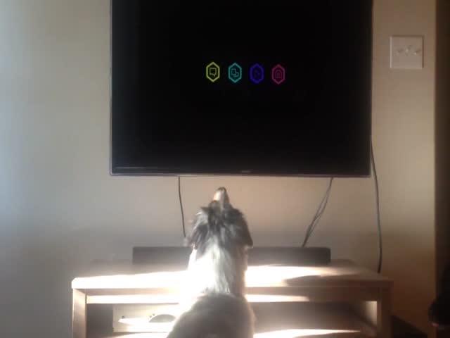 Собака, которая любит смотреть телевизор
