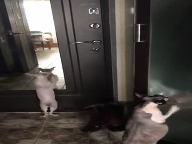 Под хит группы Грибы «Тает лед» танцуют даже коты