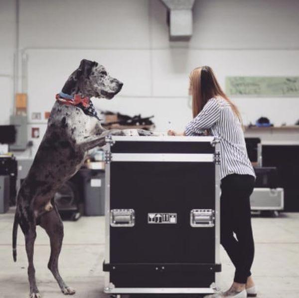 Собаки невероятно больших размеров (22 фото)