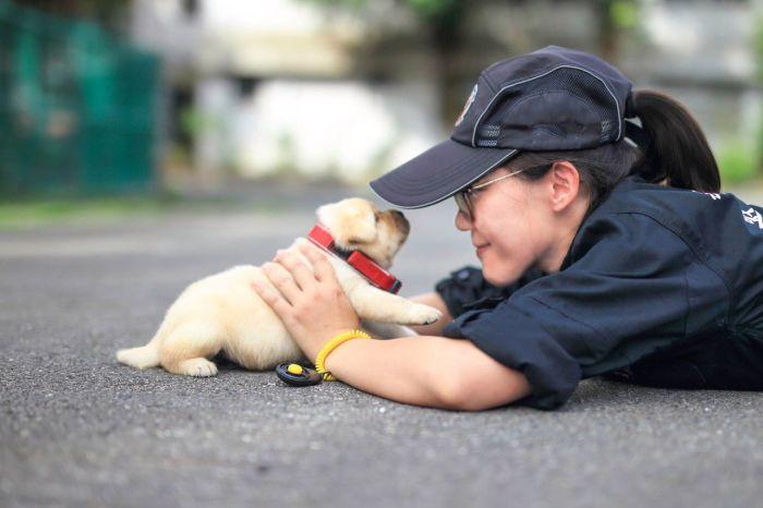Новый сотрудник полиции Тайваня (3 фото)