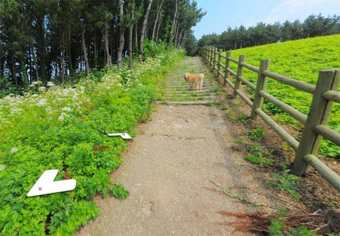 Заинтересовавшийся камерой пес попал на снимки Google Street View (7 фото)