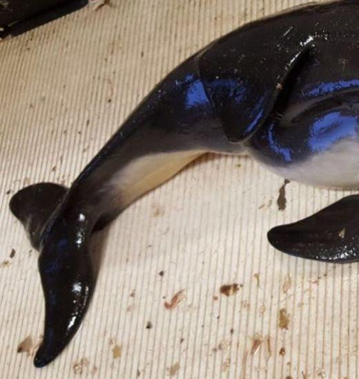 В Северном море выловили двуглавую морскую свинью (3 фото)