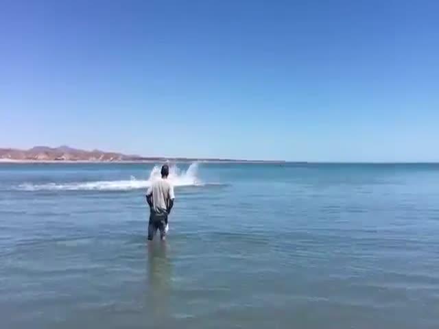 Большая акула застряла на мелководье